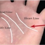 Palm Lines What Do They Mean